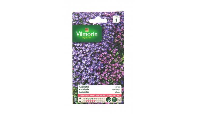 Aubriétia - Variée - Vilmorin